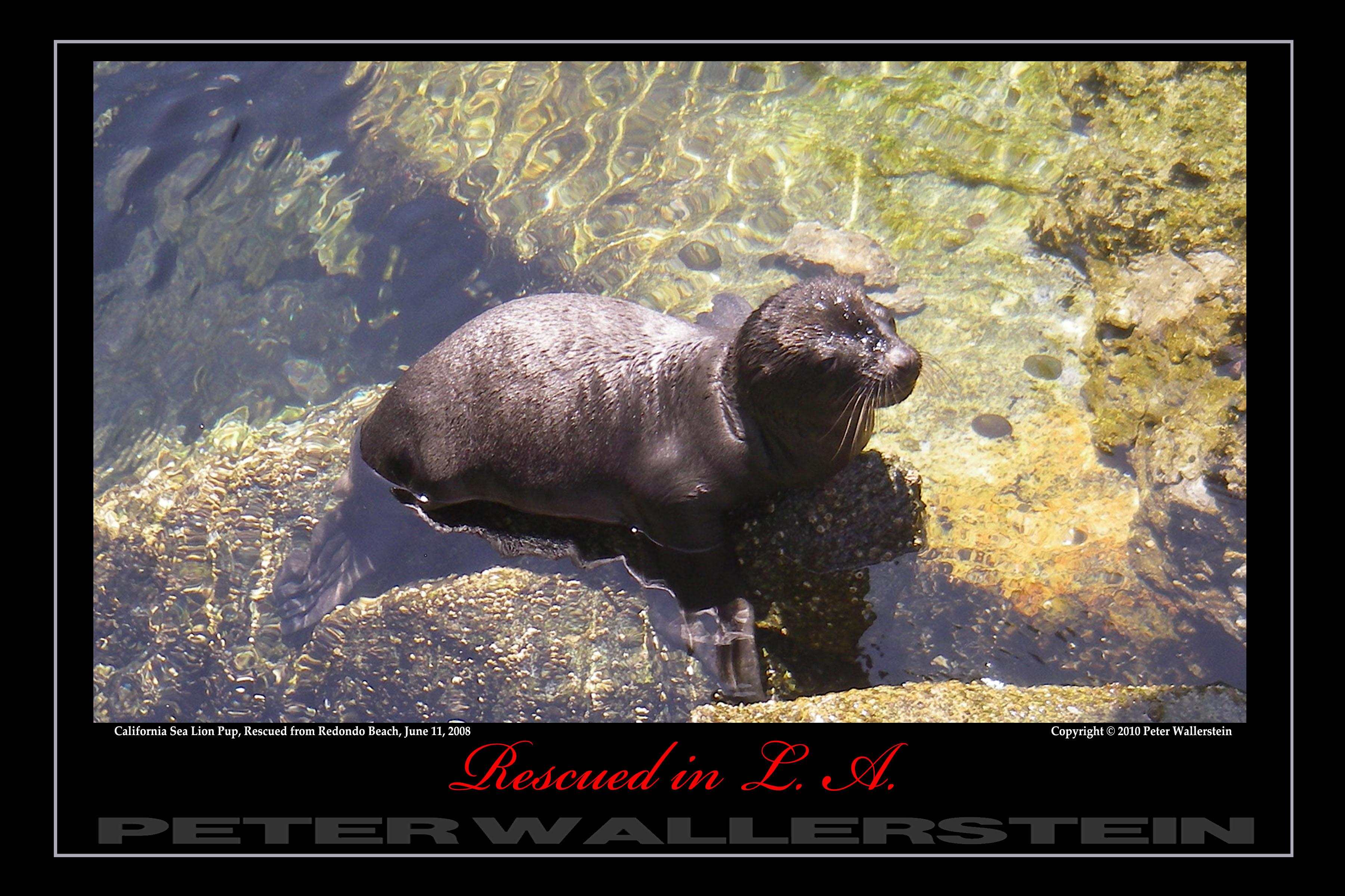 Sea Lion Pup on the Rocks
