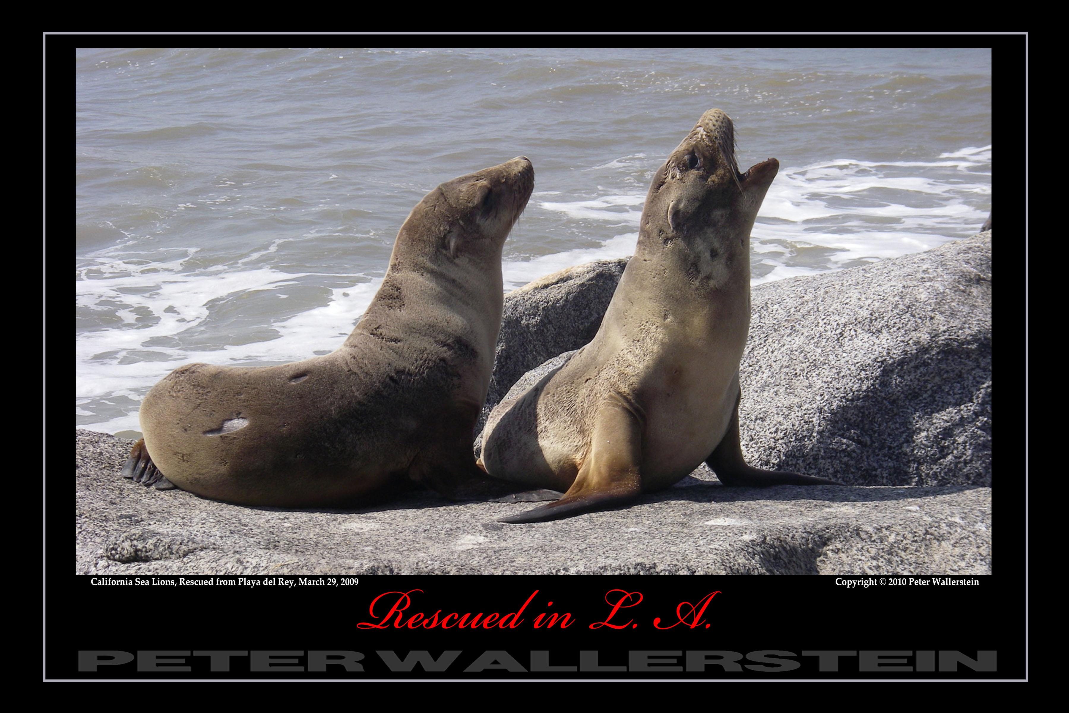 Two Sea Lion Pals