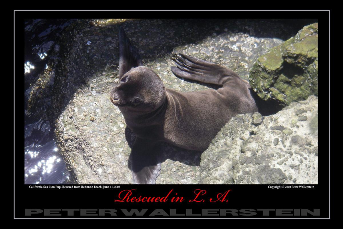 California Sea Lion Rocks